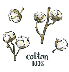 Natural Cotton set vector image
