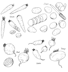 hand drawn root vegetables vector image