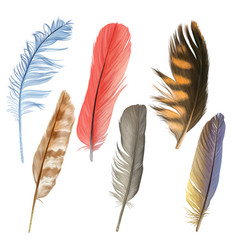 colorful feather hand drawn collection vector image vector image