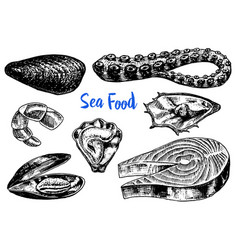 mussels and octopus oyster and salmon steak vector image