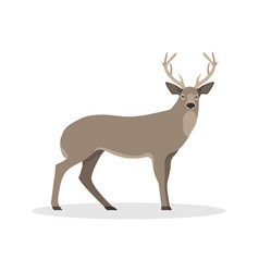isolated with a deer vector image