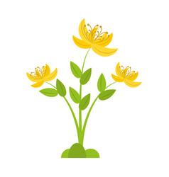 Yellow lily flower natural vector