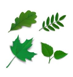 Summer oak maple ash birch leaves vector image vector image