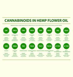 cannabinoids in hemp flower oil horizontal vector image