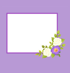purple frame with white rose flowers gentle daisy vector image