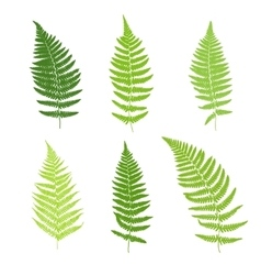 Set fern frond silhouettes vector