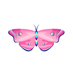 colorful butterfly on white vector image