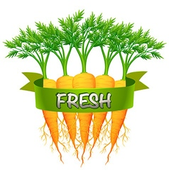 Fresh carrots with green banner vector image