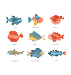 Sea fish set tuna salmon fugu flounder dorado vector