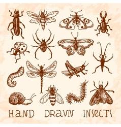 Insects sketch set vector image vector image