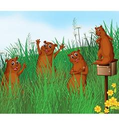 Cartoon Beavers vector image