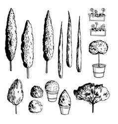 mediterranean trees vector image