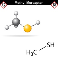 Methyl mercaptan molecule vector image