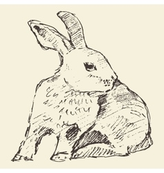 Rabbit engraving style vintage hand drawn sketch vector image
