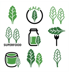 Superfood - kale leaves green icons set vector