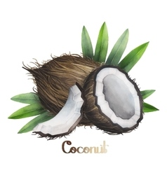 Watercolor coconut design vector image