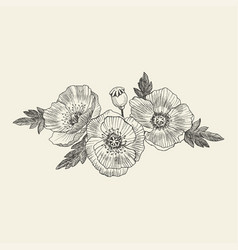 California poppy flowers drawn and sketch vector