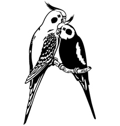 cockatiels black white vector image