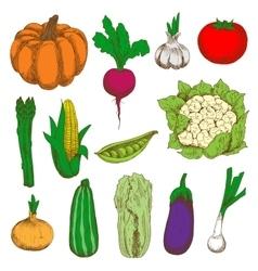Colored sketched vegetables for agriculture design vector