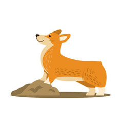Happy cute corgi dog icon vector