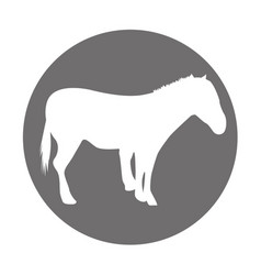 Horse silhouette isolated icon vector