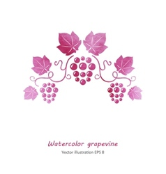 Watercolor style green grapevine vector image