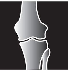 Xray on bones vector