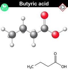 Butanoic acid molecule vector image vector image