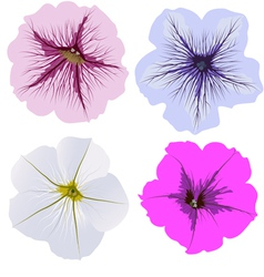 Set of four petunia flowers vector image vector image