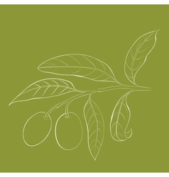 Two olives on branch with leaves isolated on green vector image