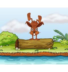 Rabbit on a log vector image