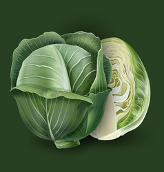 Cabbage on a green background vector