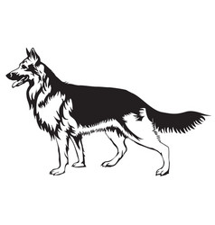 decorative german shepherd vector image