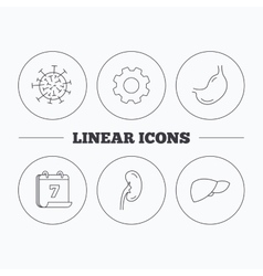 Virus stomach and kidney icons vector