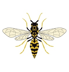Wasp top view vector image