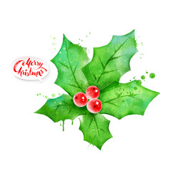 Watercolor of mistletoe vector