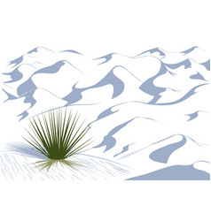 Yucca plant in a dessert vector