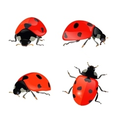 Set of hand drawn ladybugs ladybirds vector image vector image