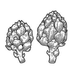 artichoke in engraving style design element vector image