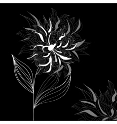 greeting card with white flower vector image