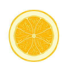 sliced colored sketch style fruit lemon vector image