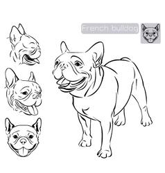Line art French Bulldog vector image