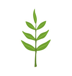 ash tree green leaves vector image vector image