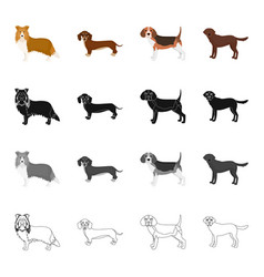 Collie dachshund beagle and other web icon in vector