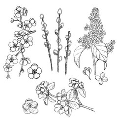 hand drawn spring natural collection vector image