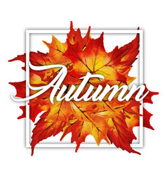 Autumn logo collection vector