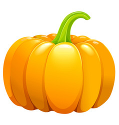 beautiful pumpkin without leafes vector image