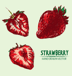 digital detailed color strawberry vector image vector image