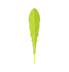 green leaf of a dandelion vector image