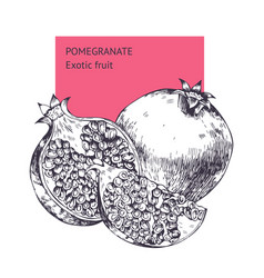 pomegranate fruit hand drawn sketch vector image